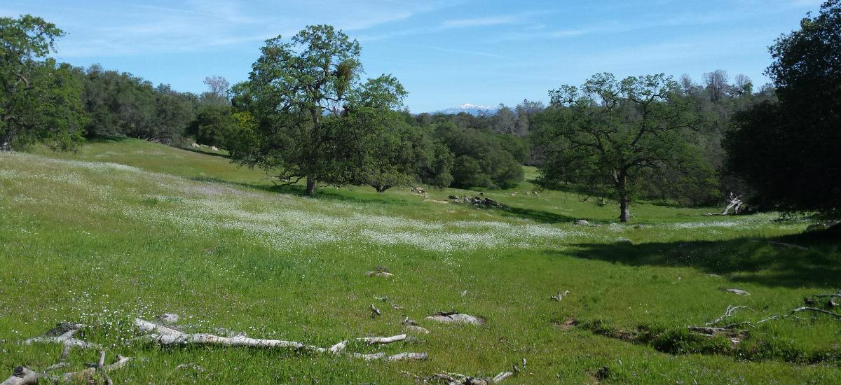 oakwoodland